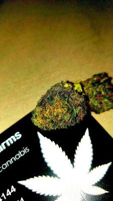 Midwest Strain Bulk Hemp CBD Flower