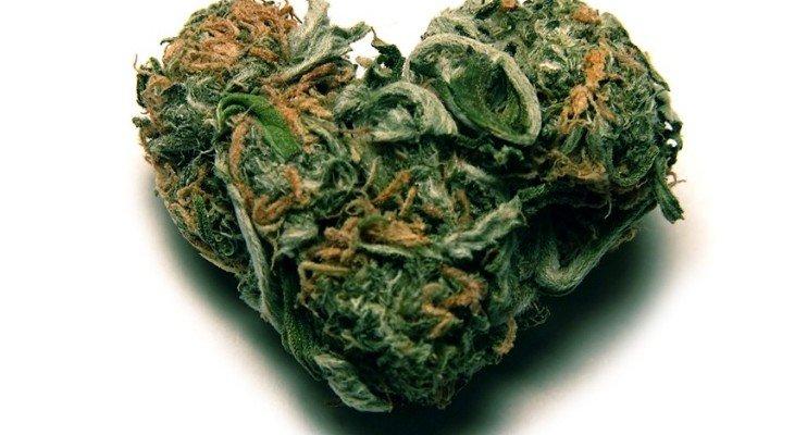 Может болеть сердце от марихуаны сыроедение конопляные семена
